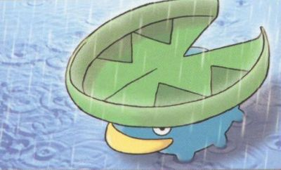 lotad in the rain